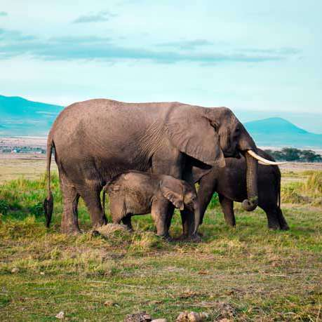 4 days amboseli-masai mara safaris