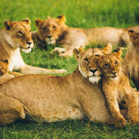 4 days masai mara wildlife safari