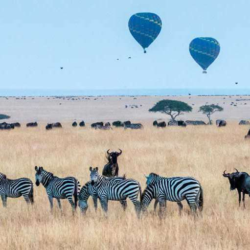 3 days masai mara wildlife safari